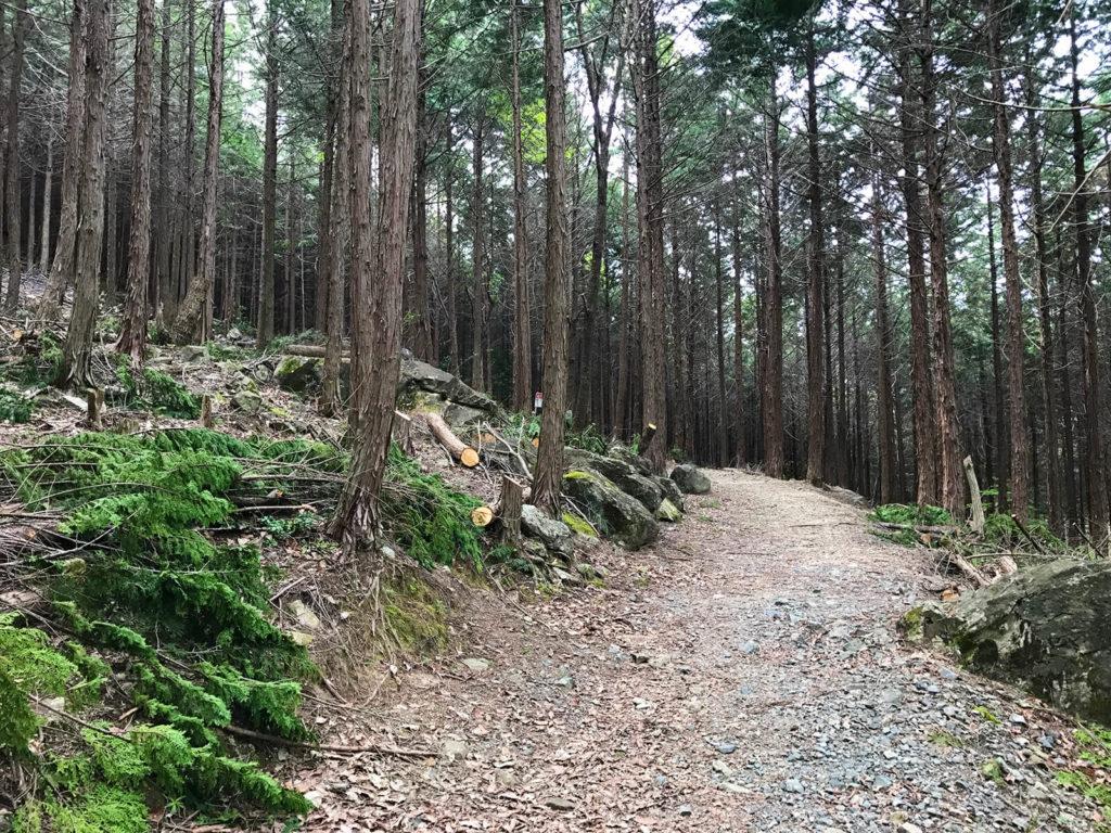 歩きやすそうな山道